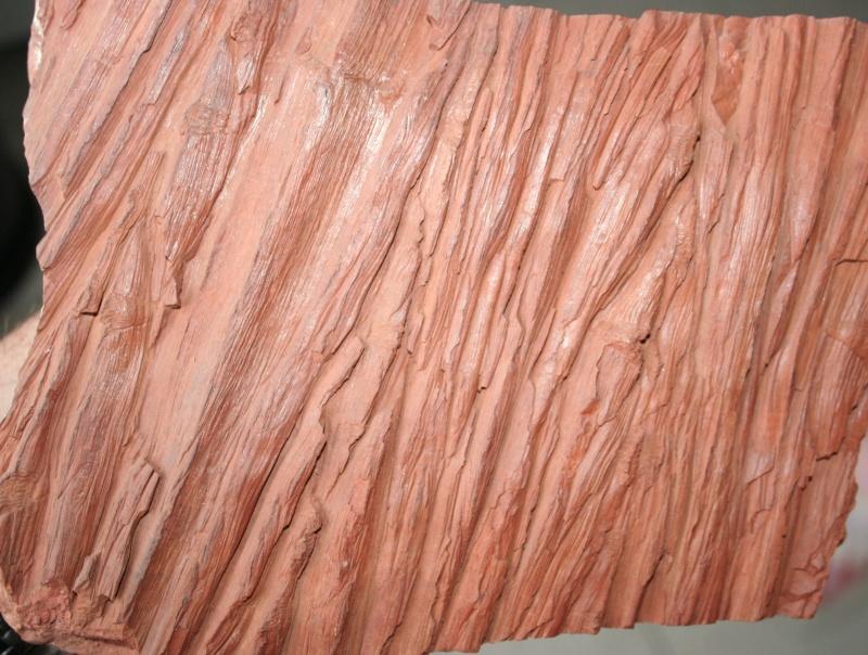 Grès (Sandstone) Schistes( Shale) types de conservation Img_4213