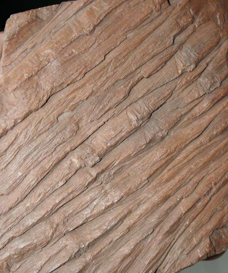 Grès (Sandstone) Schistes( Shale) types de conservation Img_4310