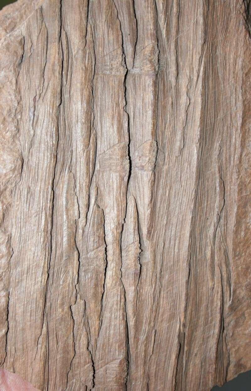 Grès (Sandstone) Schistes( Shale) types de conservation Img_4316