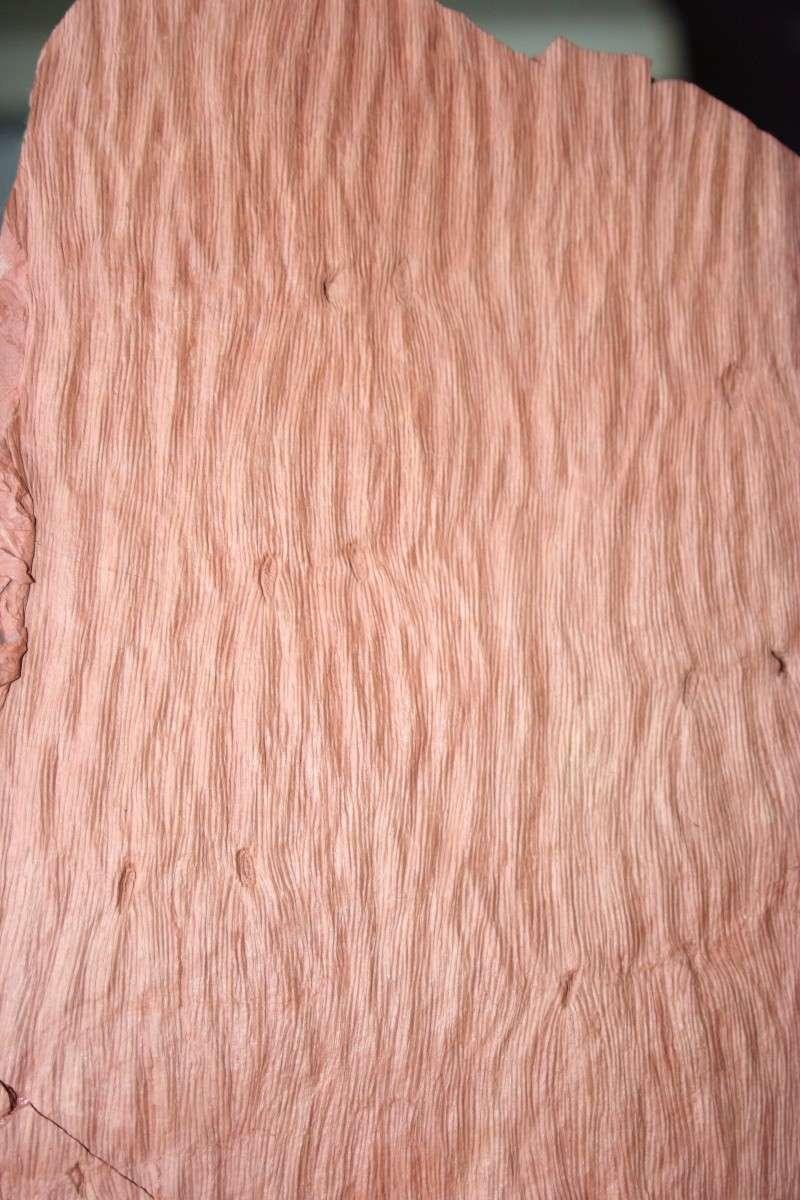 Grès (Sandstone) Schistes( Shale) types de conservation Img_4317