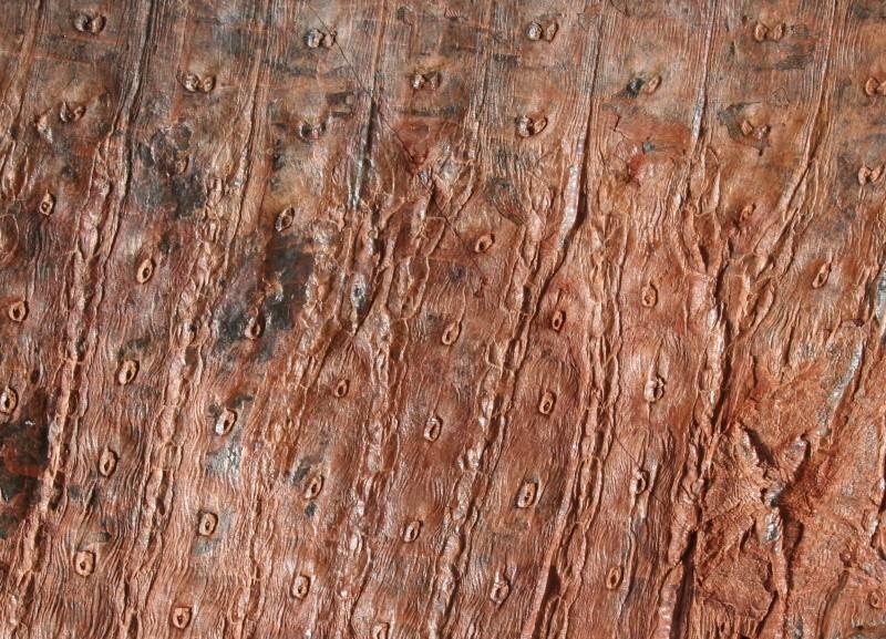 Sigillaria et zone d'insertion des sigillariostrobus Img_4918