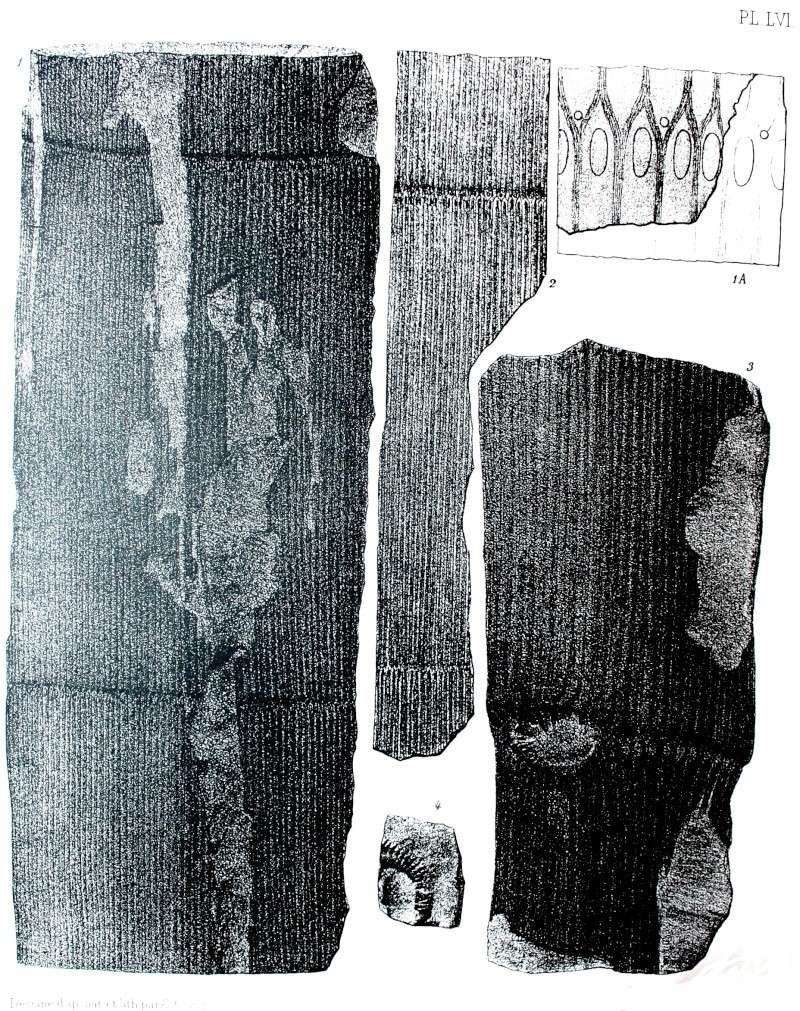 Calamites Schlotheim ,1820.  Annularia sternberg , 1822 .  Img_4922