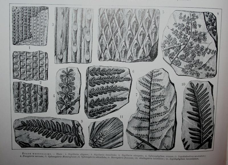 Représentation bidimensionnelle de la forêt houillère Img_4925