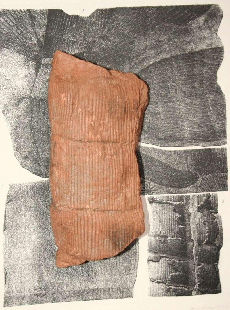 Calamites Schlotheim ,1820.  Annularia sternberg , 1822 .  Img_8011
