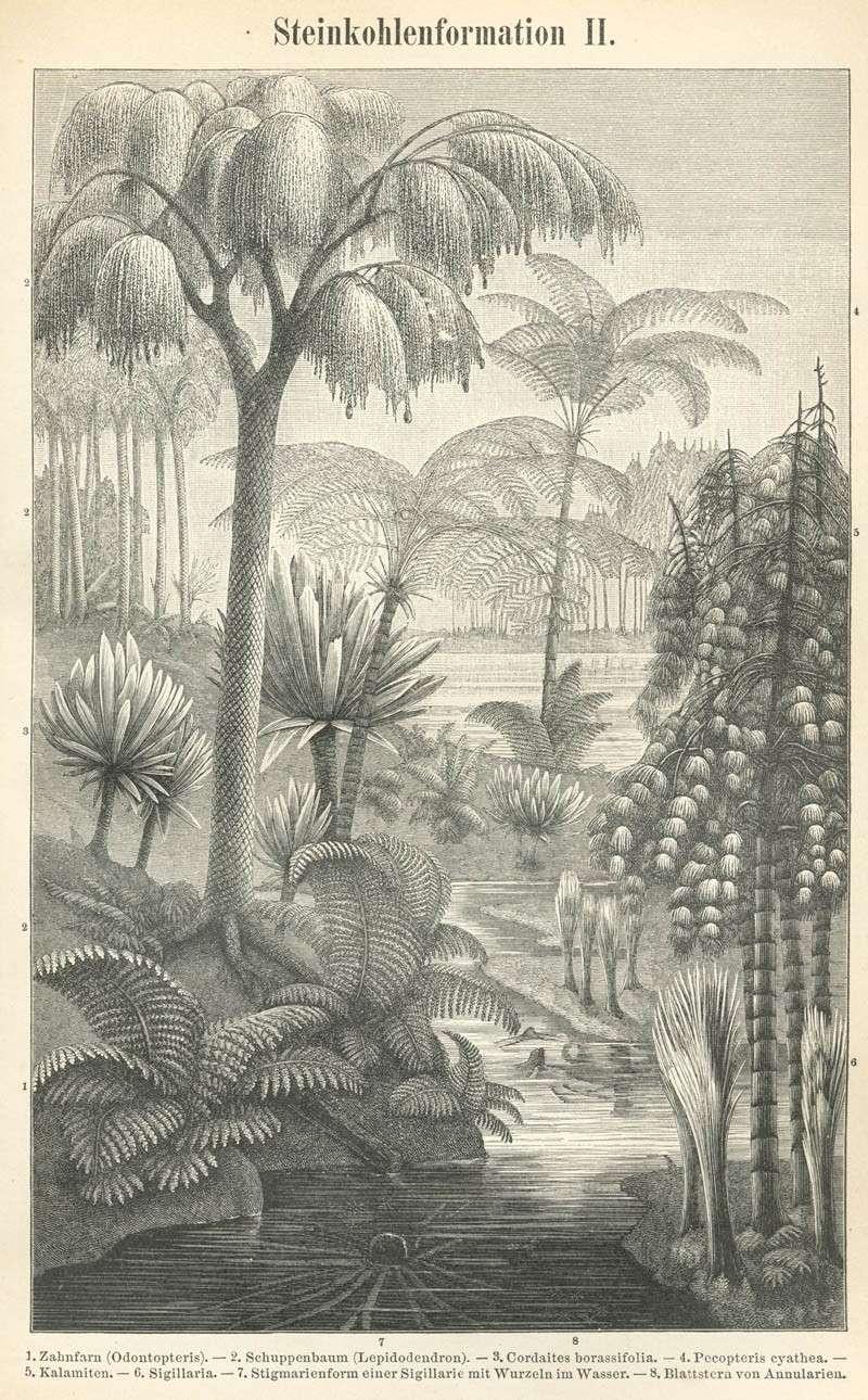 Représentation bidimensionnelle de la forêt houillère Meyers10