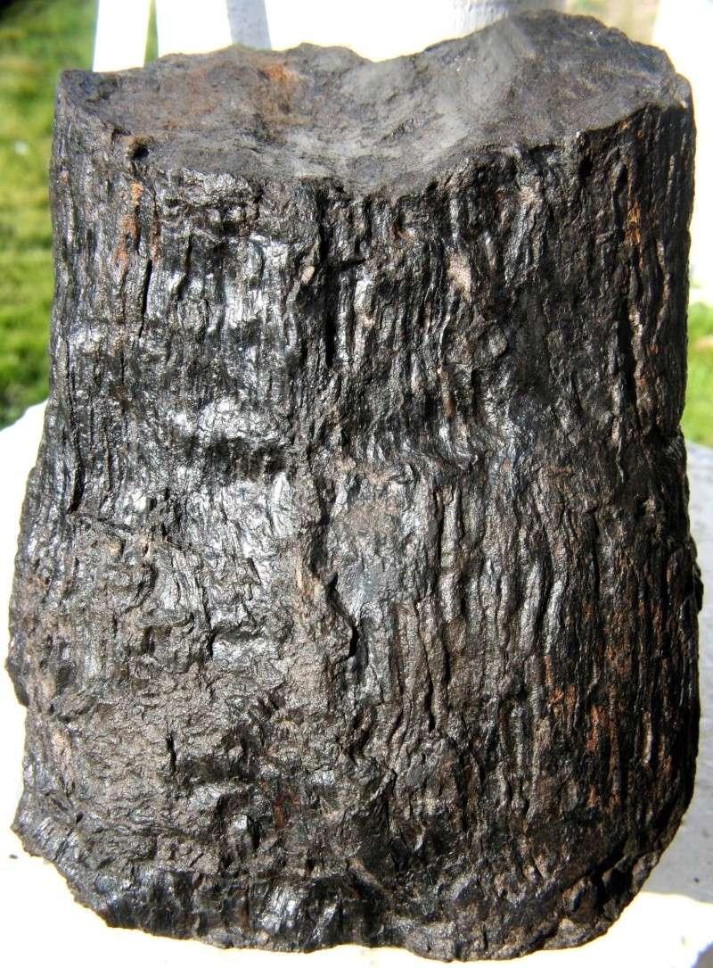Structures et bois fossiles Nr123410