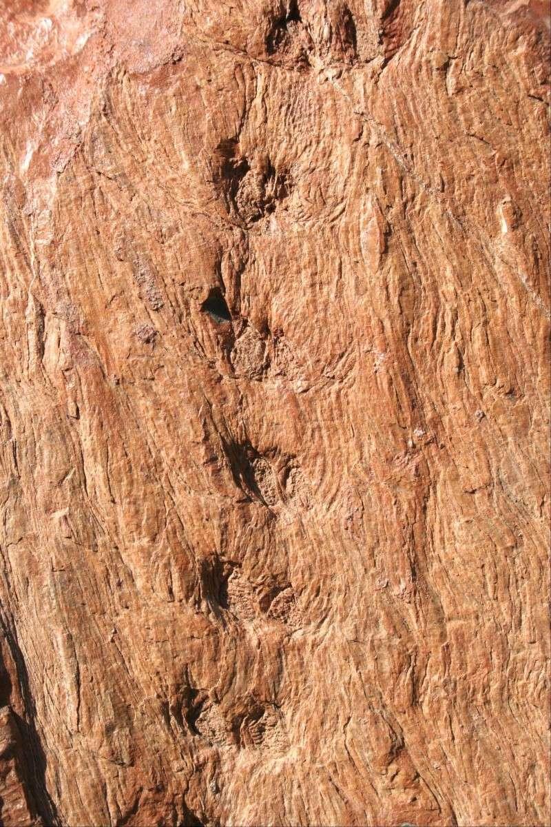 Grès (Sandstone) Schistes( Shale) types de conservation Nr_12410