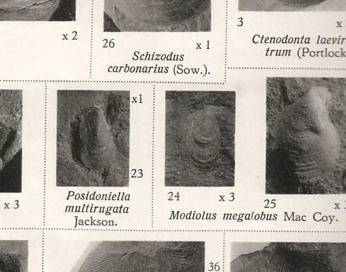 carbonifere P169_p11