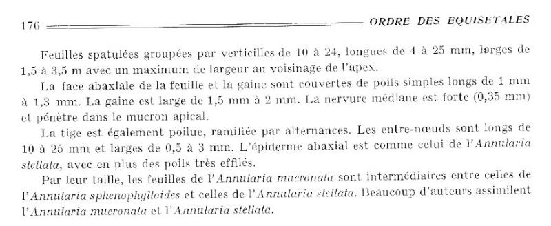 Calamites Schlotheim ,1820.  Annularia sternberg , 1822 .  - Page 2 P176_o10
