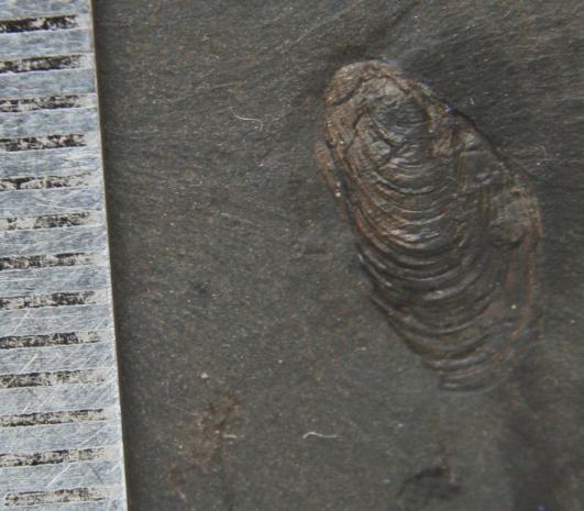 carbonifere Post-111