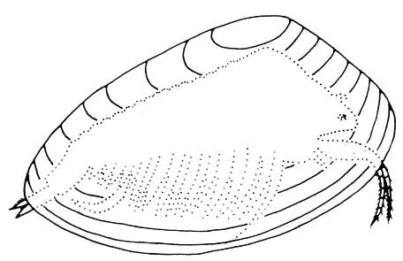 carbonifere Post-112