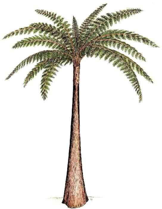 Structures et bois fossiles Psaron10