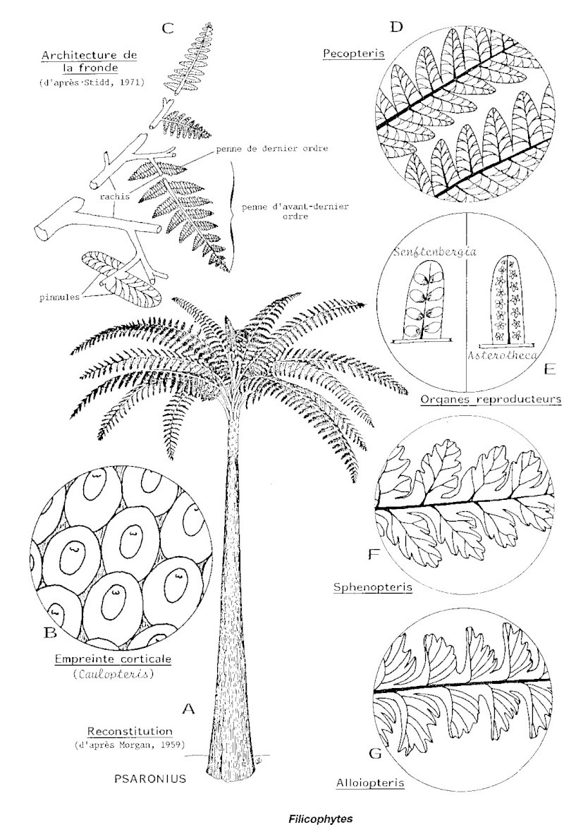 Structures et bois fossiles Recons14
