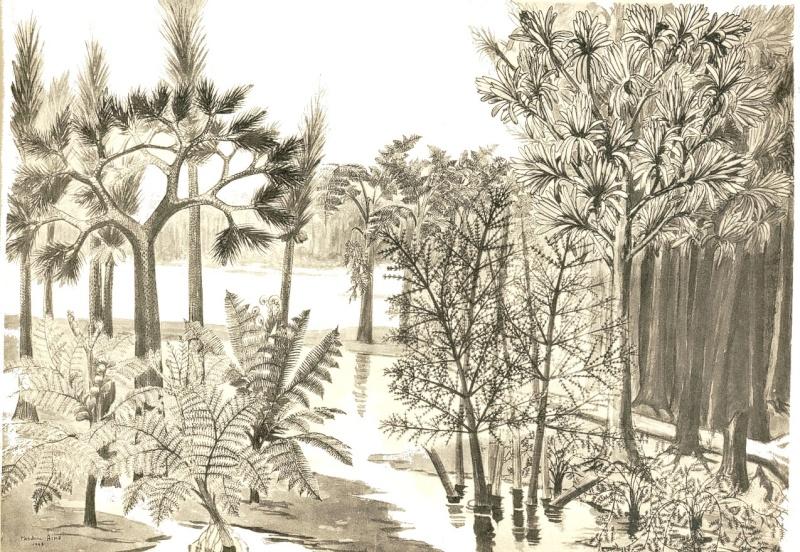 Représentation bidimensionnelle de la forêt houillère Recons15