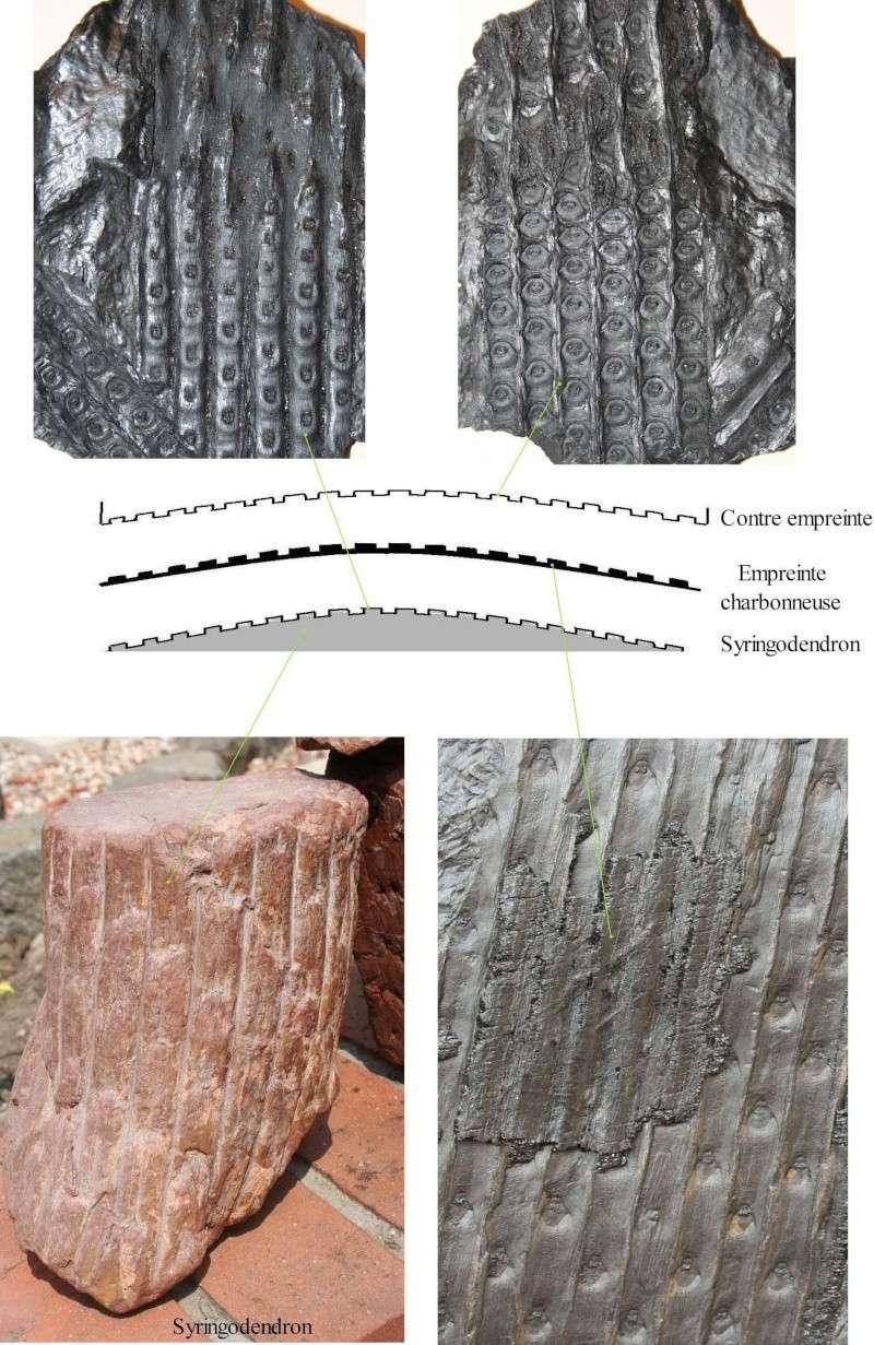 Grès (Sandstone) Schistes( Shale) types de conservation Sigill13