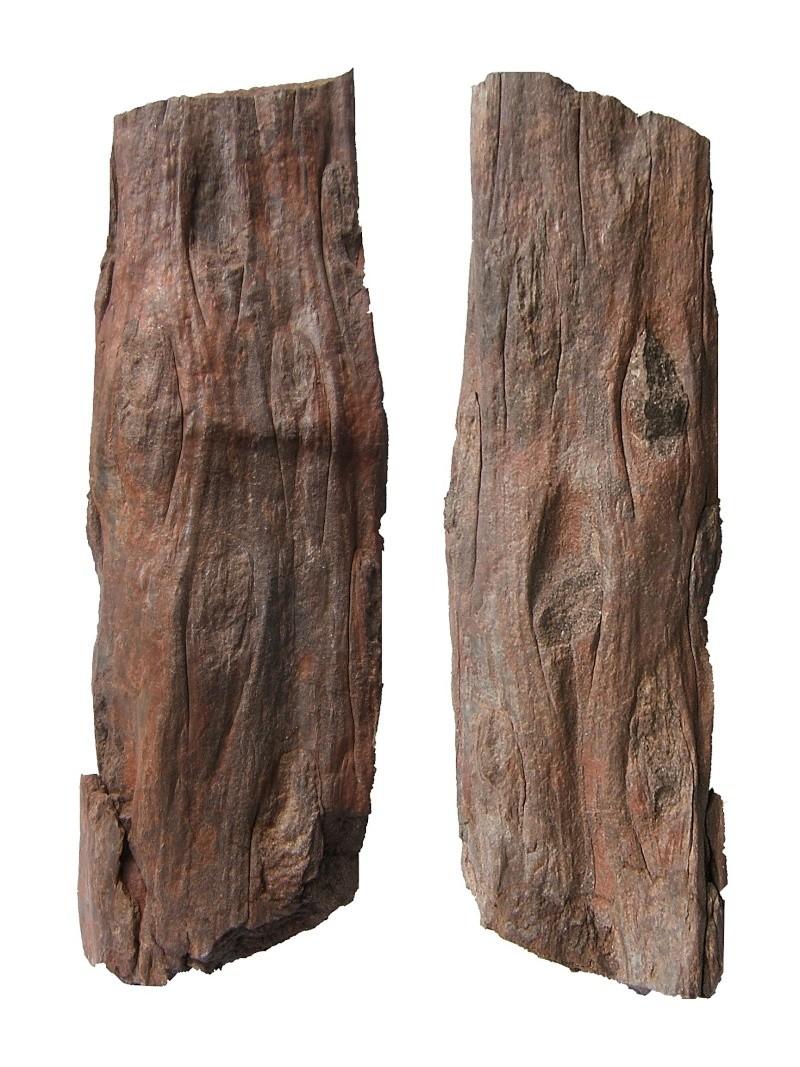 Ptychopteris Corda , 1845 . Tronc_10