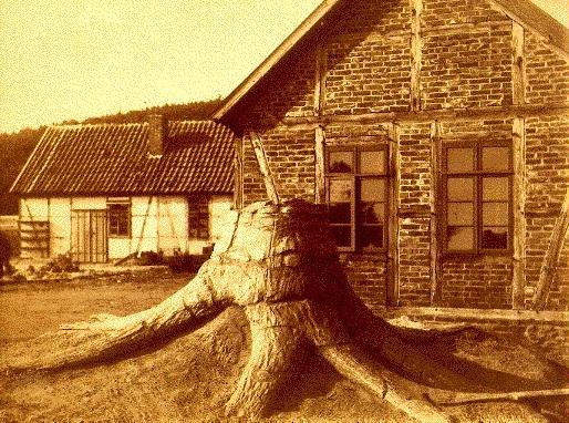 Sauvez les troncs ! Tronc_17