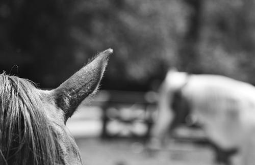 Os cavalos sabem falar 68458010