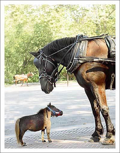 Os cavalos sabem falar Cavalo10