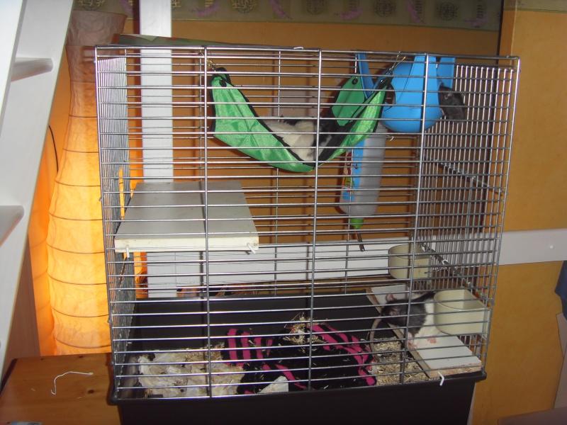 Vend cage pour 3/4 rats maxi Sdc11812