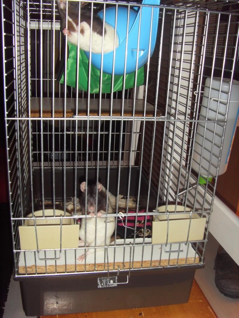 Vend cage pour 3/4 rats maxi Sdc11813