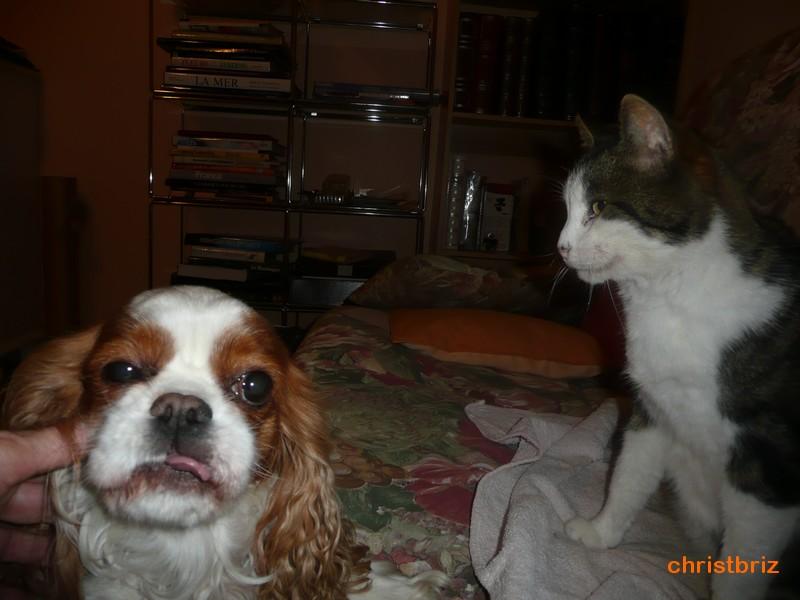 aska ma chienne et ingo mon chat 2010_151