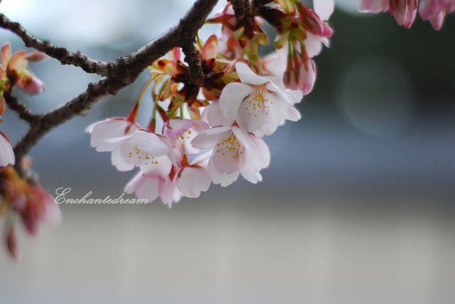 my japan trip pictures ^^ Dsc_2010