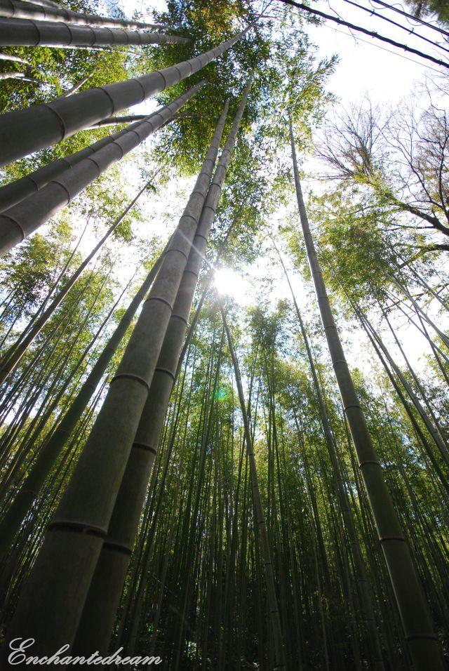 my japan trip pictures ^^ Dsc_2214