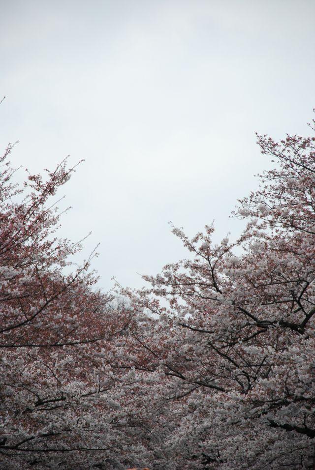 my japan trip pictures ^^ Dsc_3511