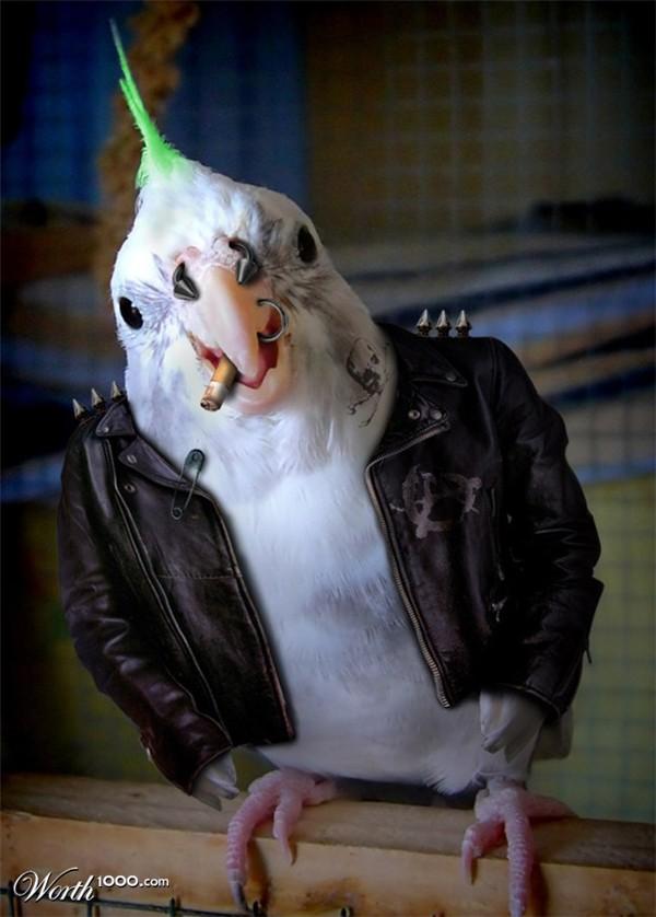 Punk & Post Punk Stories ... le topic anti Rock Prog' ! Animau10