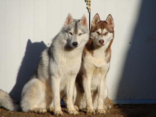 Les loups...... 22121510