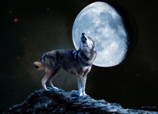 Les loups...... Creati10