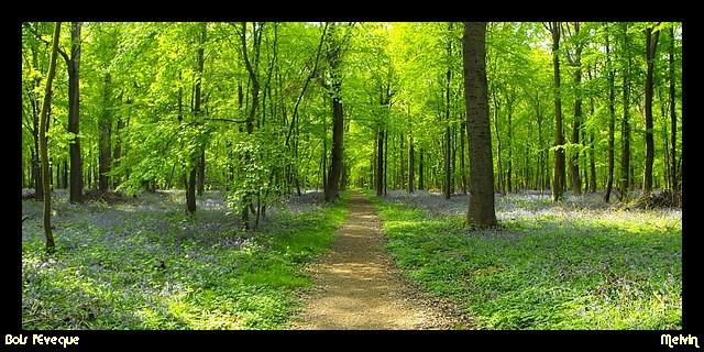 Au pays des Ch'tis Bois_l10
