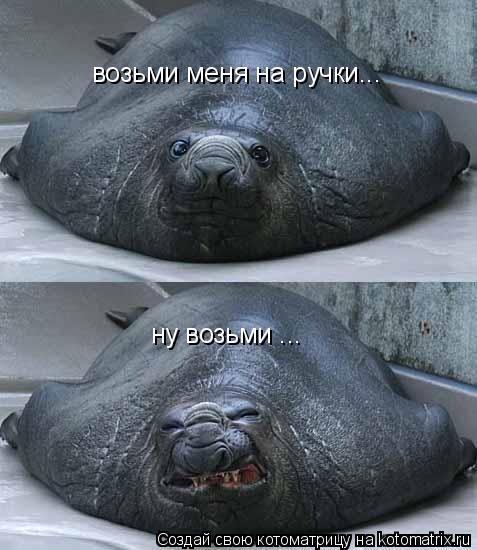 Смешные фотографии животных 67531810