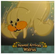 Breaking Newz Walrus10