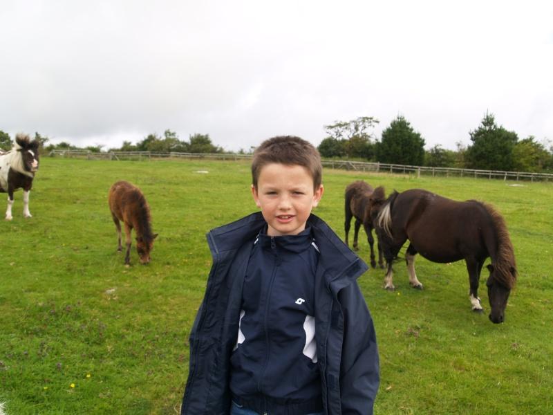 horsey Pictur11