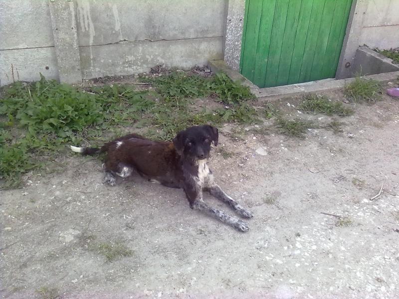 Pépito, 7 ans, type ratier, maltraité cherche SA famille - SPA de Gien (45) 18042011