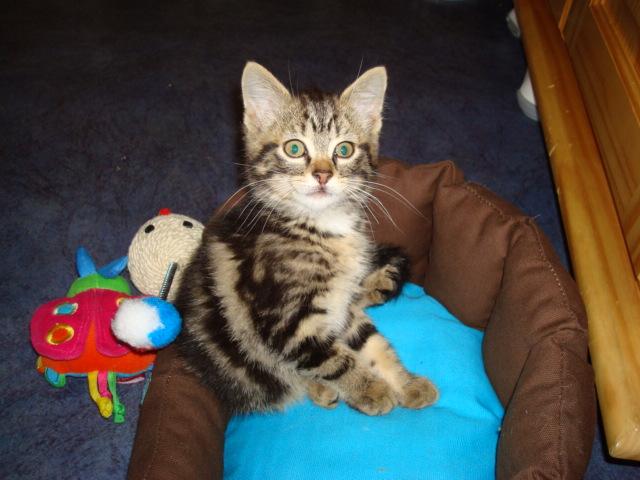 Eliott, un de mes chatons en FA, positif à la leucose... - Page 2 Dsc02110