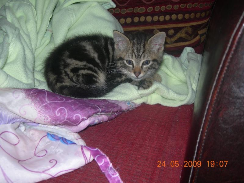 Eliott, un de mes chatons en FA, positif à la leucose... Dscn2713