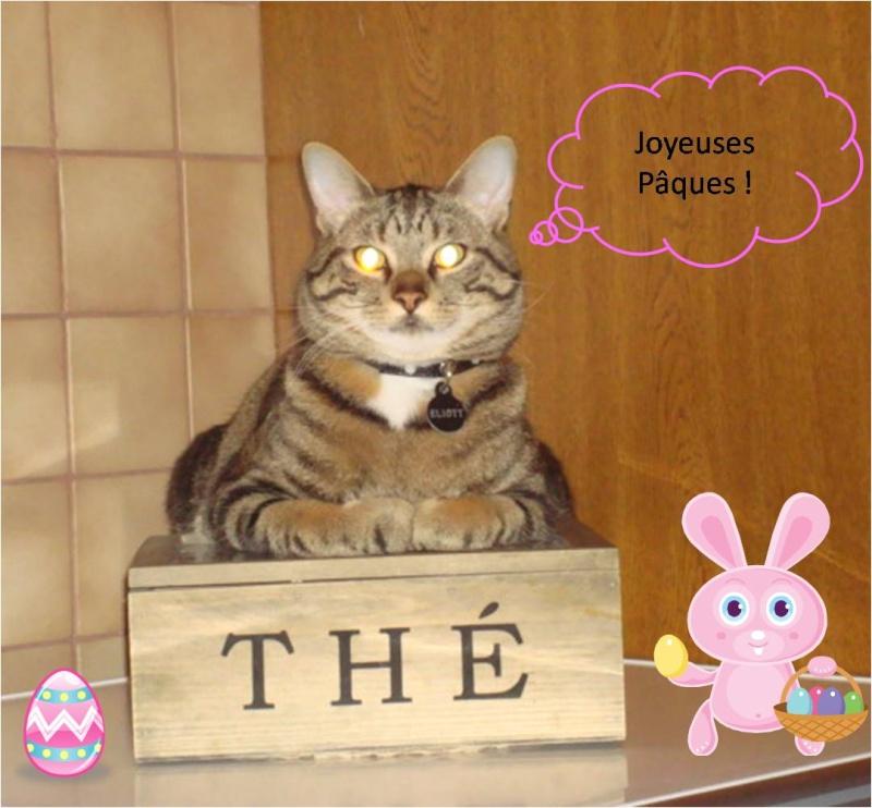 Eliott, un de mes chatons en FA, positif à la leucose... - Page 2 Image110