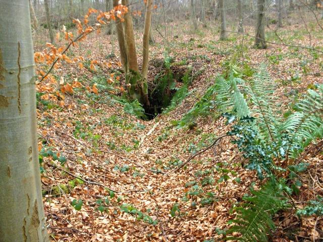 Llanfwrog Woods Mine Hpim3018