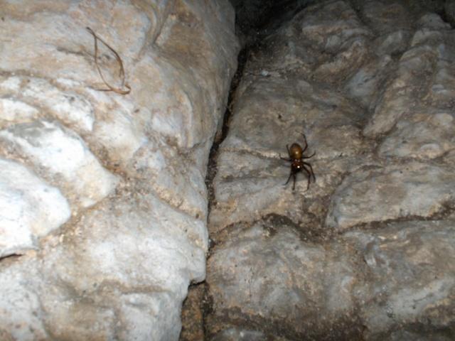 Denbigh Castle Cave Hpim4217