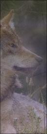 {Yuna} Eirwer [F] Avatar29