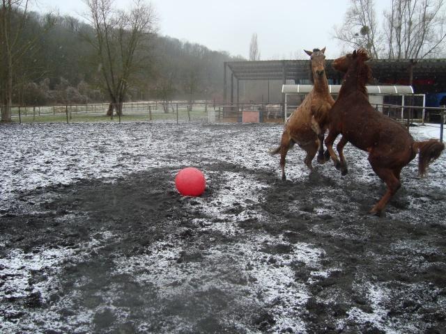 Shan, neige, ballon et ballade. Dsc00512