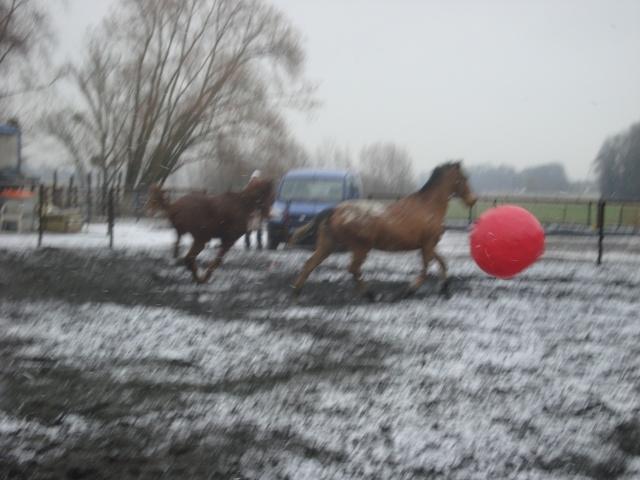 Shan, neige, ballon et ballade. Dsc00514