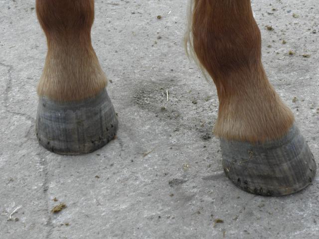 Et les pieds ??? Pc160310