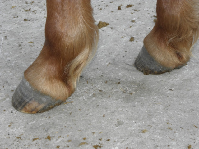 Et les pieds ??? Pc160312