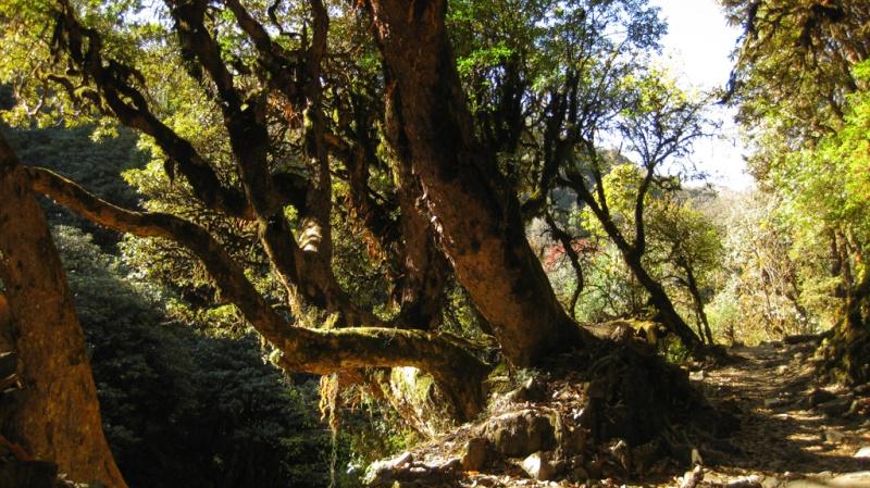 Fotoprojekt - Bäume Anapur10