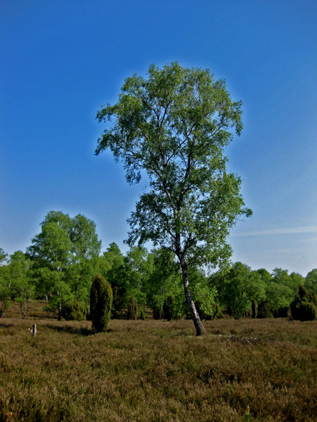 Fotoprojekt - Bäume Bokele10