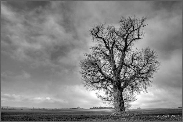 Fotoprojekt - Bäume - Seite 6 W-soli10
